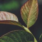 Servinformación aporta a la creación de 'Bosques de paz'